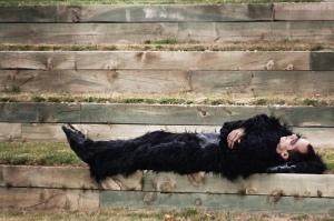 Homme ou gorille?/ Photo Juanedc