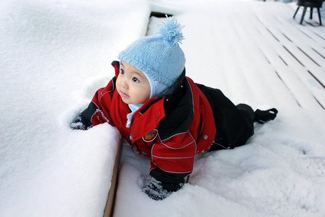 Henry in the snow./ Photo Harald Groven