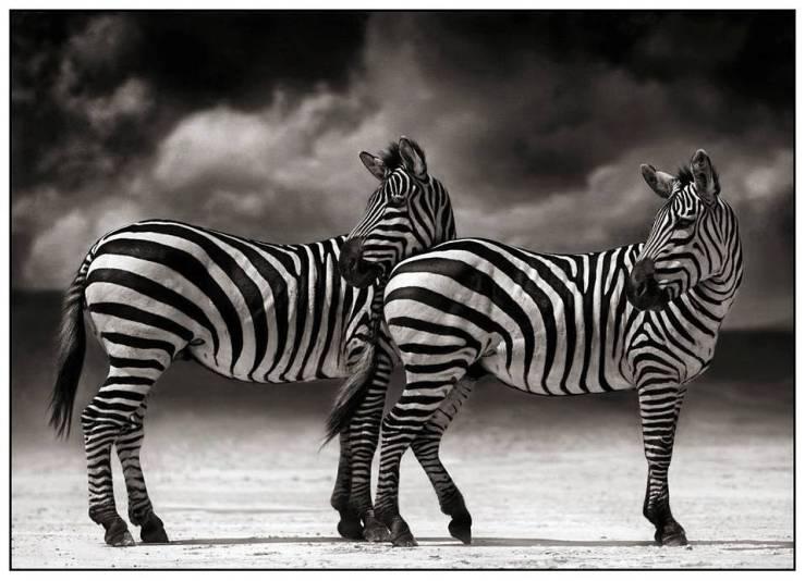 En noir et blanc./ Photo Radiblog