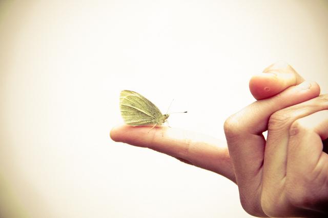 L'effet papillon./ Photo Steven Depolo