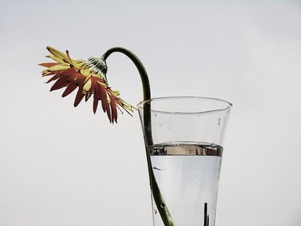Fleur en burn-out./ Photo HUS0