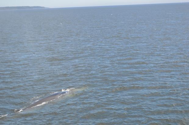 Croisière aux baleines avec AML./ Photo Dr Lexie Swing